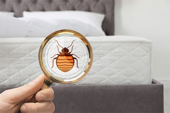 Bed Bug Treatment Buckeye