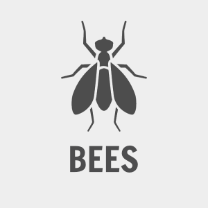Bee Intensive Services